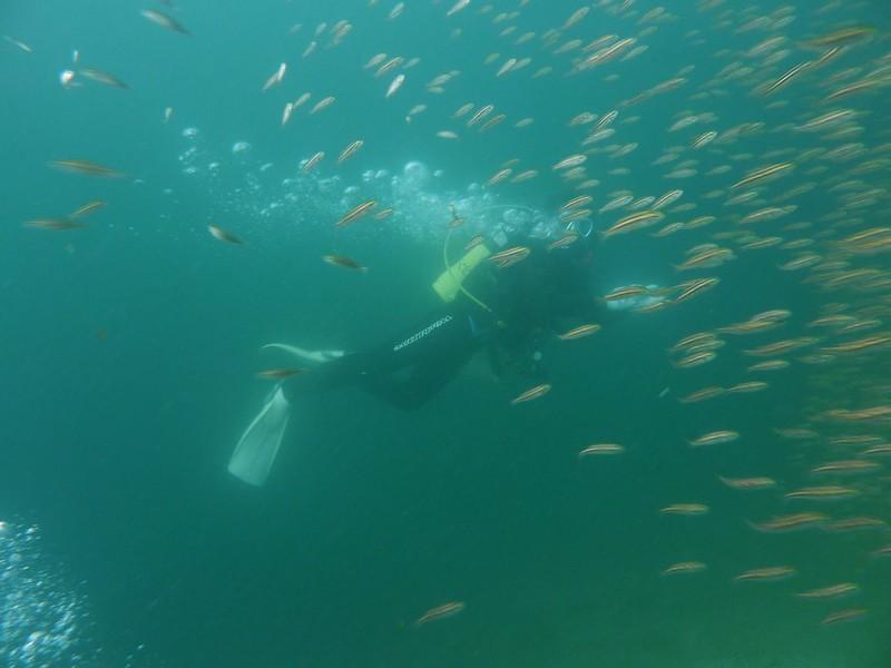ダイビング獅子浜20090921